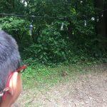 CampsiteMoocherRedSquirrel