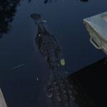 retro camper okefenokee swamp 107 of 116
