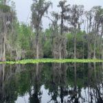 retro camper okefenokee swamp 37 of 116