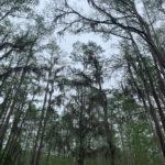 retro camper okefenokee swamp 47 of 116