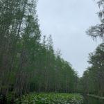 retro camper okefenokee swamp 48 of 116