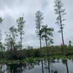 retro camper okefenokee swamp 56 of 116