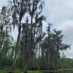 retro camper okefenokee swamp 59 of 116