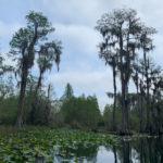 retro camper okefenokee swamp 61 of 116