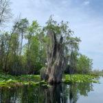 retro camper okefenokee swamp 76 of 116