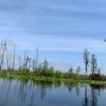 retro camper okefenokee swamp 77 of 116