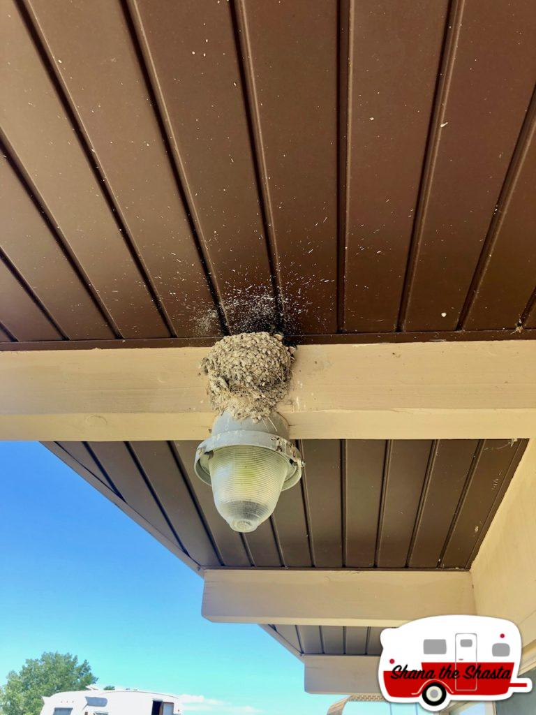 Cliff-Swallows-Bathroom-Monitors