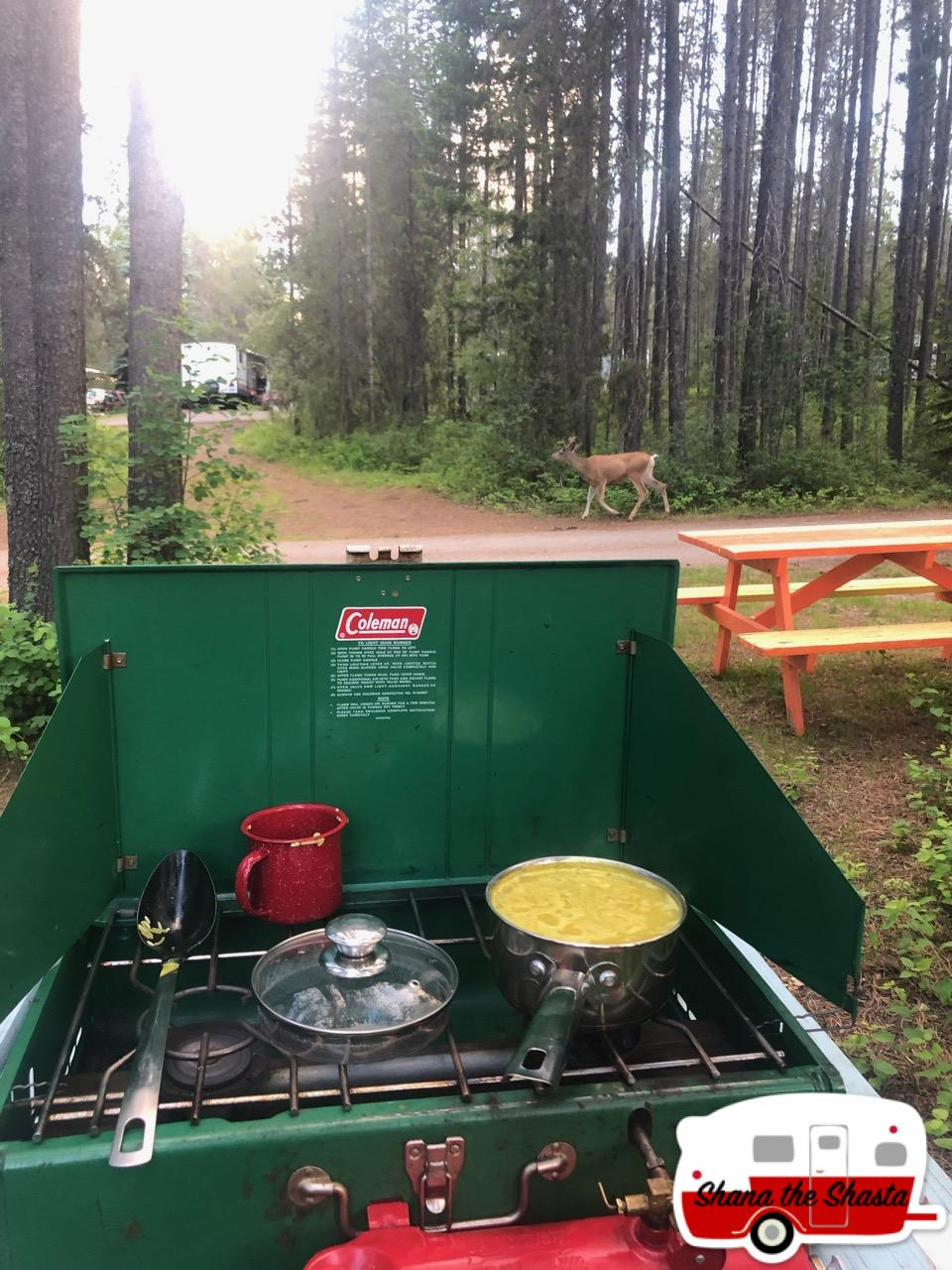 Deer-at-Dinner-in-Glacier