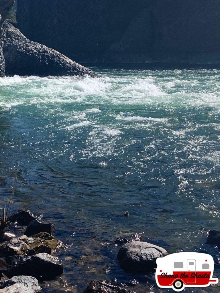 Duckling-in-Spoken-River-Rapids