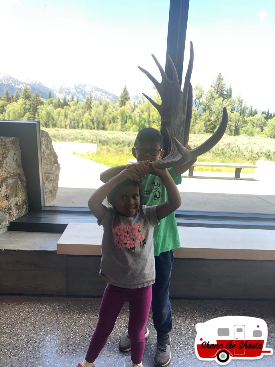 Elk-Antlers-at-Grand-Teton-Visitor-Center
