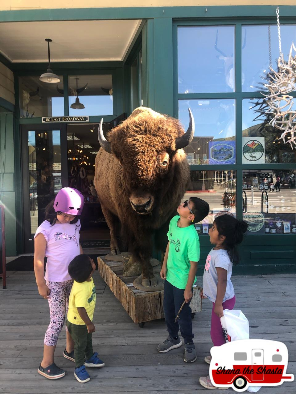 Jackson-Hole-Stuffed-Buffalo