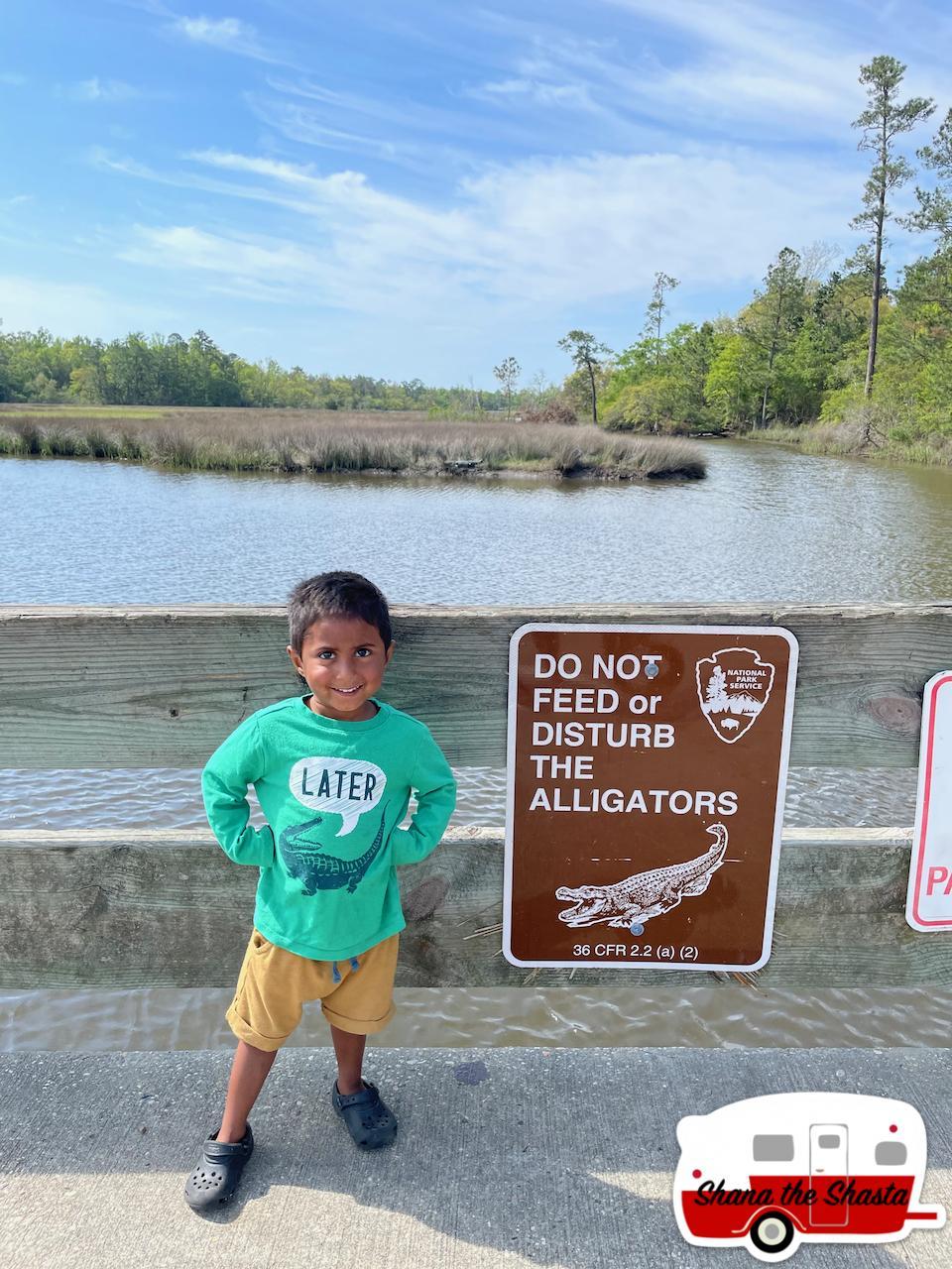 Later-Alligator-at-Gulf-Island-National-Seashore
